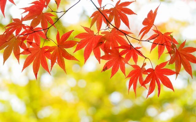 意外と知らない?「○○の秋」の由...